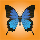 Papilio Ulysses butterfly Stock Images
