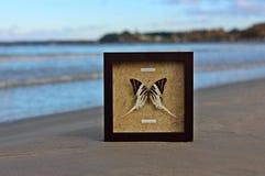 Papilionidae Lizenzfreie Stockbilder