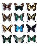 Papilionidae, Papilio (paneel) Stock Foto's
