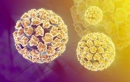 Papilloma virus Stock Image