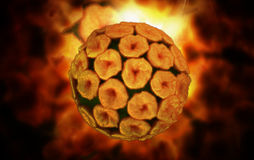 Papilloma virus Stock Photography
