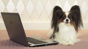 Papillon狗在床上的膝上型计算机附近说谎 库存照片