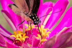 Papillon à New York hors de la ville Photos libres de droits