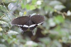 Papillon à un jardin image stock
