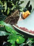 Papillon été perché Images libres de droits