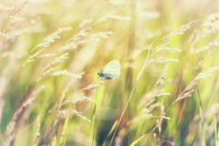 Papillon été perché sur une tige d'herbe Image stock