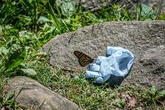 Papillon Images stock