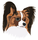Papillon Stock Images