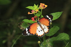 Papillon 3 Photographie stock