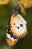 Papillon 10 Image libre de droits