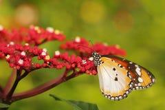 Papillon 11 Photographie stock