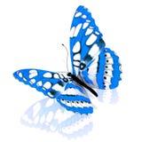 Papillon. Photographie stock libre de droits