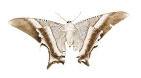 Papillon Photographie stock