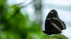 Papillon Photographie stock libre de droits
