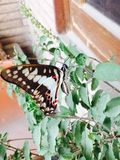 Papillon Photos stock
