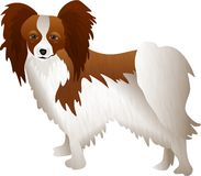 Papillon Royalty Free Stock Image