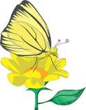 Papillon Illustration de Vecteur