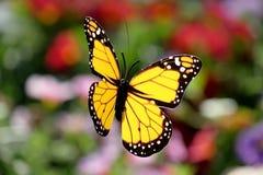 Papillon artificiel sur un fond floral Photographie stock