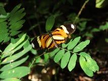 Papillon au milieu des usines image libre de droits