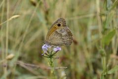 Papillon au parc Ayazmoto, Stara Zagora photo libre de droits