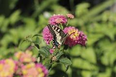 Papillon au printemps Image stock