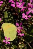 Dehors et jardin avec les insectes no2 Photo libre de droits