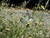 Papillon avec des fleurs Images libres de droits
