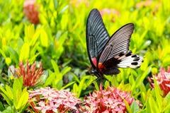 Papillon avec les fleurs rouges Photographie stock libre de droits