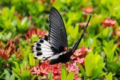 Papillon avec les fleurs rouges Images stock