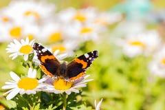Papillon avec les taches oranges et blanches sur des ailes Photo libre de droits