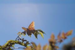 Papillon avec un rayon du soleil Image libre de droits