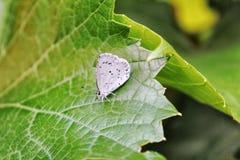 Papillon blanc Image stock
