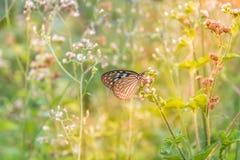 Papillon bleu avec le matin de lumière du soleil photographie stock