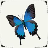 Papillon bleu, beauté grise de noir d'illustration de vecteur illustration stock