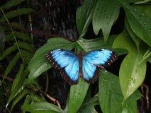 Papillon bleu d'ailes en métal photographie stock libre de droits