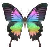 Papillon coloré Photo stock