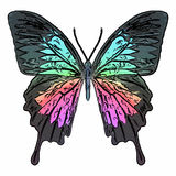 Papillon coloré illustration de vecteur