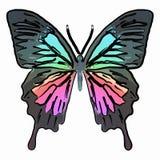 Papillon coloré illustration libre de droits