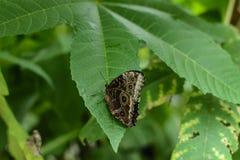 Papillon coloré avec le fond vert Image stock