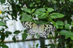 Papillon coloré avec le fond vert Photo libre de droits