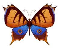 Papillon coloré de vecteur Photo stock