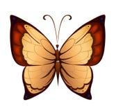 Papillon coloré de vecteur Images libres de droits