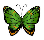 Papillon coloré de vecteur Images stock