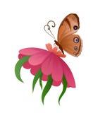 Papillon coloré de vecteur sur la fleur Photo stock