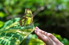 Papillon coloré en gros plan se reposant sur le woman& x27 ; main de s photographie stock libre de droits