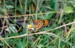 Papillon coloré minuscule photo libre de droits