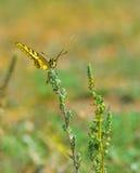 Papillon coloré se reposant sur la fleur dans le pré Photos libres de droits