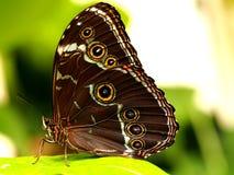 Papillon coloré tropical Images stock