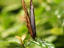 Papillon coloré tropical Photos libres de droits