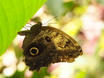 Papillon coloré tropical Images libres de droits